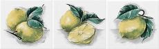 Neopolis 0007121 Bianco lucido Limoni ABC 10*10
